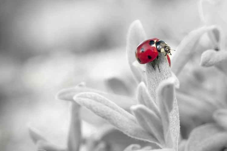 ladybug-insect-nature.jpg